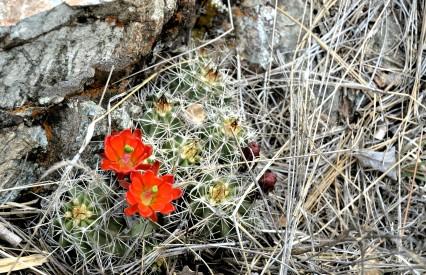 Hortons Creek Flower